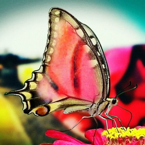 Mypointofview Color Photography Check This Out Creative Photography That's Me Feeling Inspired Lifesenjoyment Butterfly ❤ Magical Sendyou-myphotos Enjoying Life Aprilphotochallenge Inspiring_photography_admired