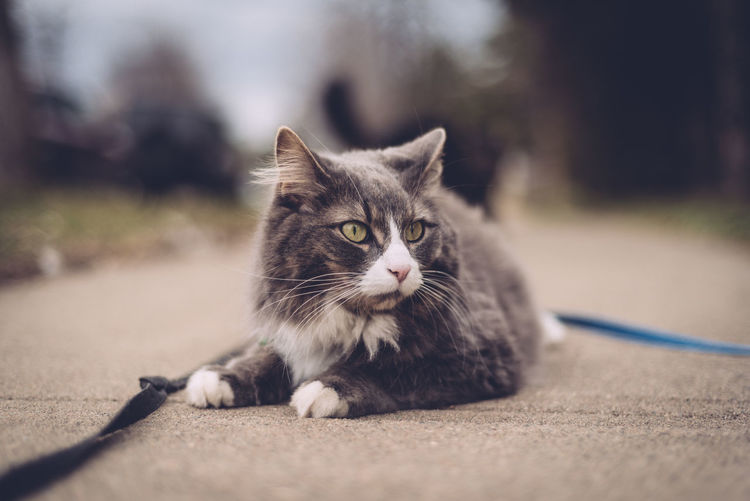 Animal Themes Cat Domestic Animals Domestic Cat Feline Focus On Foreground One Animal Pets Selective Focus Whisker