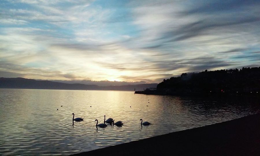 Beautifull sky mixed with sunset and swans First Eyeem Photo