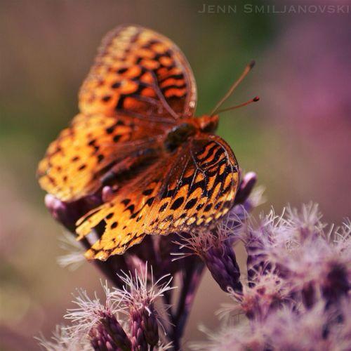 Butterfly Eye Em Nature Lover EyeEm Best Shots Tadaa Community