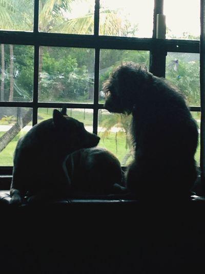 Doggy views. Dogs Love Best Friends Dog Talk Art Window