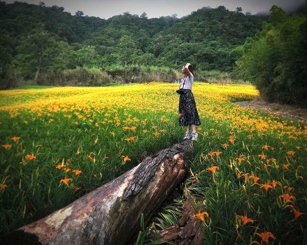 Flower Tree Rural Scene Poppy Agriculture Field Women Sky