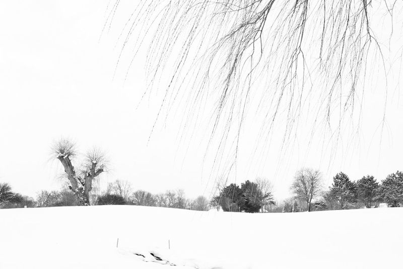 Painting Chinese Painting EyeEm Gallery Eye4photography  Showcase: January Sonwing WHiTE WORLD It's Cold Outside Tree Snow Snow ❄ Winter Woods Blackandwhite Black & White Black And White