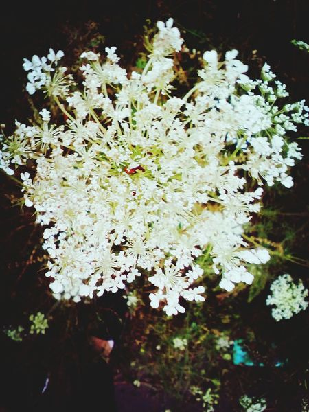 Flower White Color Nature Beauty In Nature Day Plant No People Good Times