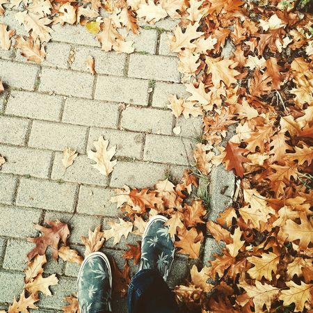 Autumn Happy Feet Changing Seasons Leafs Vans Enjoying Life