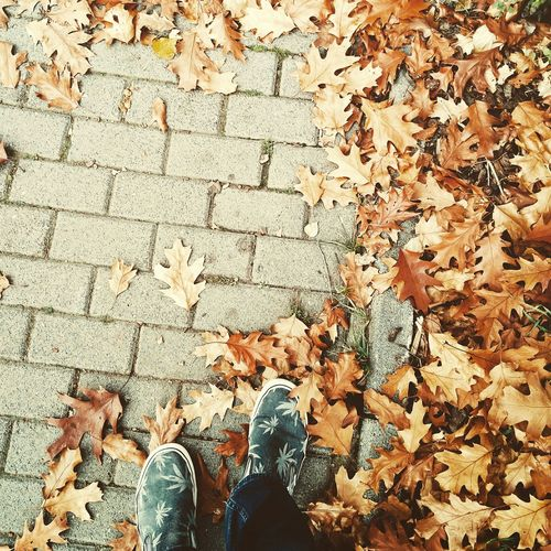 Autumn Happy Feet Changing Seasons Leafs Vans Enjoying Life