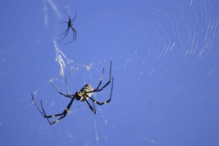 Spider Spider Web