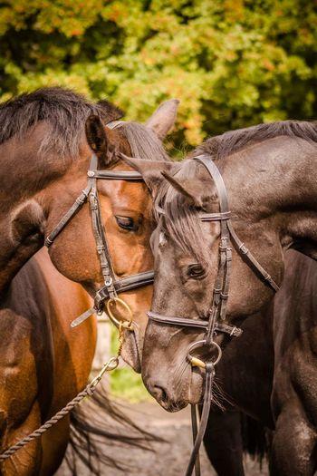 Horses touching