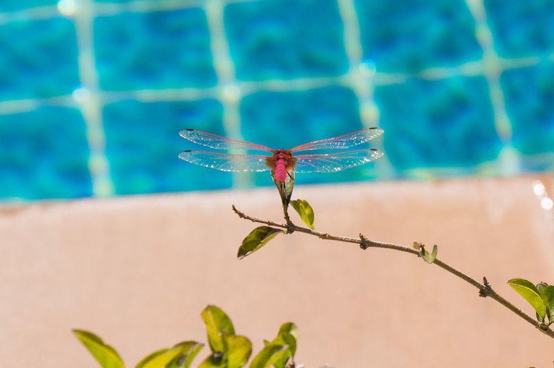 Canoma Photography Thailand Vacation Time Animal Themes Animal Wildlife Close-up Dragonfly Focus On Foreground Insect Koh Lanta One Animal Vacation