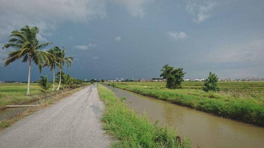 Field Landscape Sky Beauty In Nature Rice Paddy Paddy Fields Sony Xperia Z5 At Alor Setar Malaysia