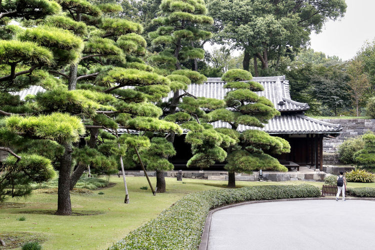 Beautiful Clean Japan Japanese  Japanese Garden Nature Picturesque Pine Trees Plants Tokyo Trees Well-kept