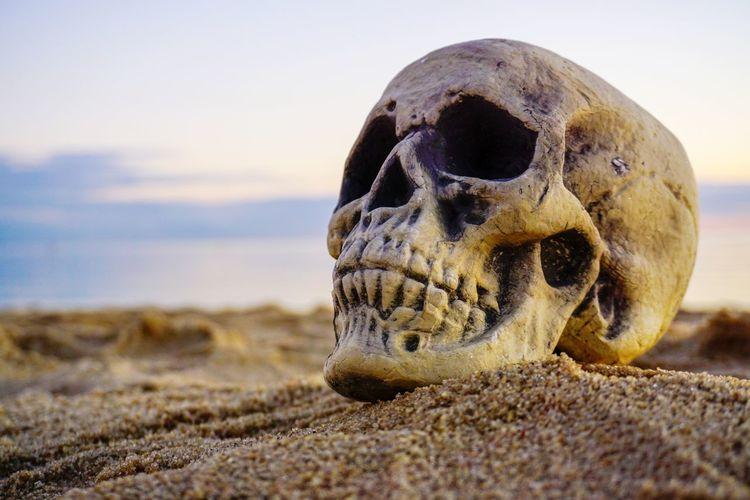 Waiting Beach Horror Human Skull Skeleton Death Grim Decay Creepy Scary Spooky Waiting Beach Sand Desert Close-up Evil Halloween Murderer Murder The Still Life Photographer - 2018 EyeEm Awards