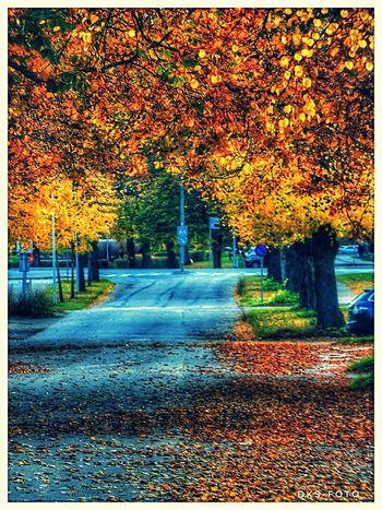 Sweden The True Story Eskilstuna-streetphotography adventures in the city Tree Autumn Sky Architecture