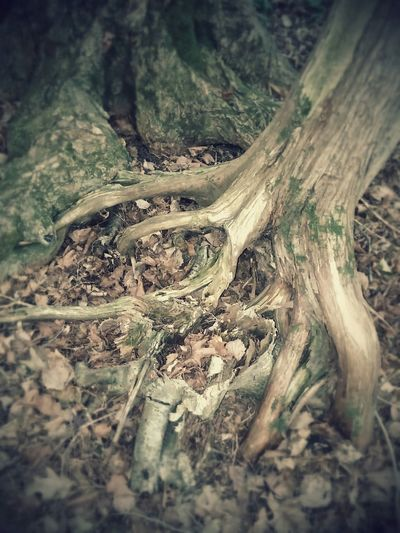 Roots Trees Nature Intertwine Enjoying The Sun Escaping Getting In Touch Taking Photos Enjoying Life Relaxing