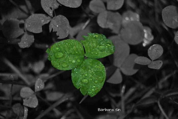 I love rainy mornings. I love the water effect. Water Plants Trebol