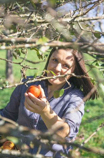 Woman Harvesting Apples In Orchard