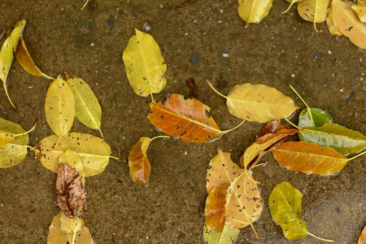 High angle view of leaves on wet street