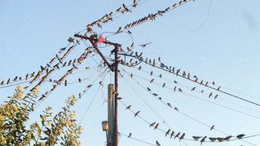 Bird Row Green Pole Electricwire Many Tree Nearhome Monsoon Naturallover Instagram ASIA Handsome Noone Lo EyeEm Best Shots Adult Boy Shay Boy EyeEm Best Shots EyeEm Nature Lover EyeEm Best Edits Firsteyeemphoto Beautiful Paradise Awesome