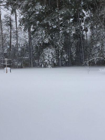 IPhoneography Winter Wonderland