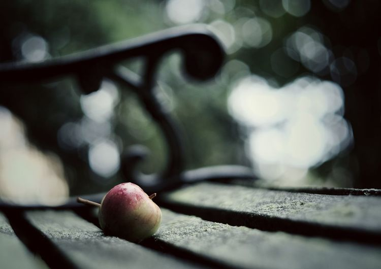 Apple Fruit Food And Drink Close-up Selective Focus No People Healthy Eating Day Outdoors Food Freshness Nature Tree Bench Herbststimmung Apple - Fruit