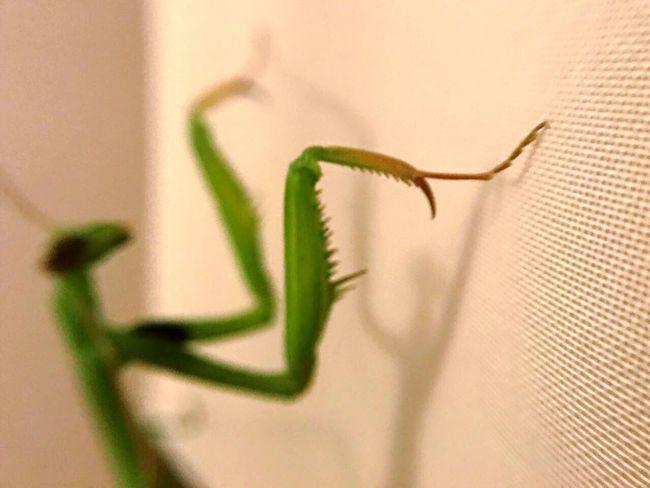 Close-up Close Up Close Insect Insects  Insect Photography Green Zoom Manatee Protectedspecies