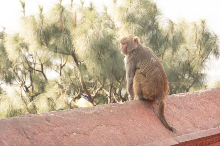 Monkey sitting on rock against trees