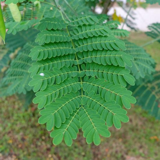 High angle view of fern leaf