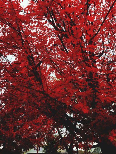 Fall Nature Trees Autumn