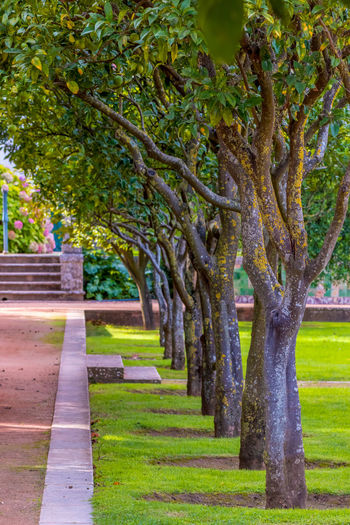 Plant Tree Grass Footpath Nature Day Green Color No People Architecture Park Growth Tree Trunk Trunk Park - Man Made Space Outdoors Beauty In Nature In A Row Tranquility Lawn The Way Forward Treelined Garden Path Ornamental Garden