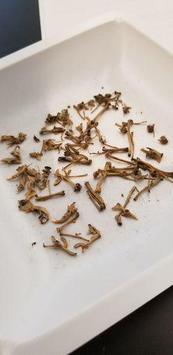 Bones EyeEm