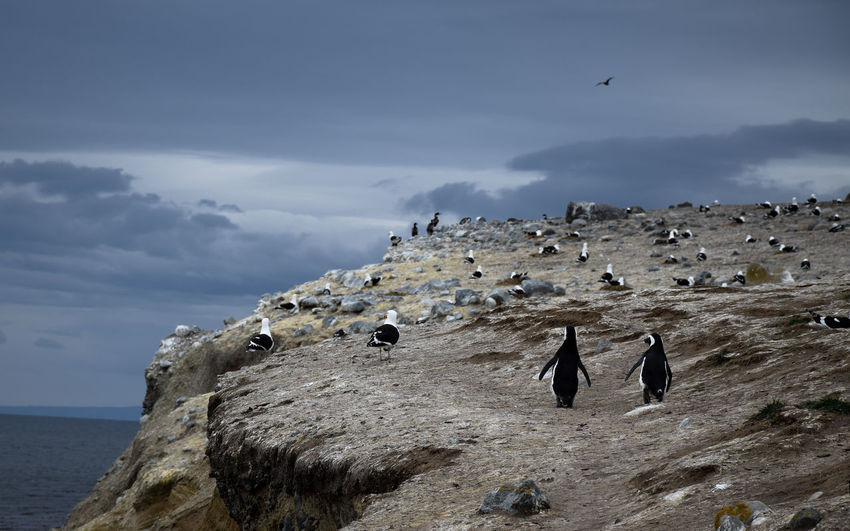 Birds on rock formation at magdalena island against sky