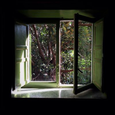Window Tree Indoors  No People Nature Quality Time Enjoying Life Nature Beauty Color Photography Winter Sunny Winter Day Green Green Color Happy Happy Together   Beauty Beauty In Nature