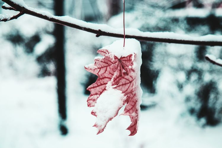 Close-up of frozen plant hanging during winter