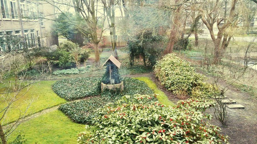 Alkmaar, PCC Fabritius Backyard