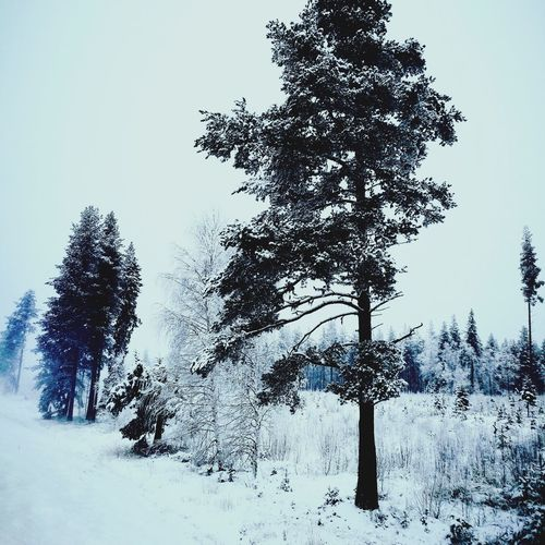 Winter winter Tree No People Outdoors Day Nature Sky Christmas Landscape Mountain Clear Sky Beauty In Nature Cloud - Sky Cold Temperature