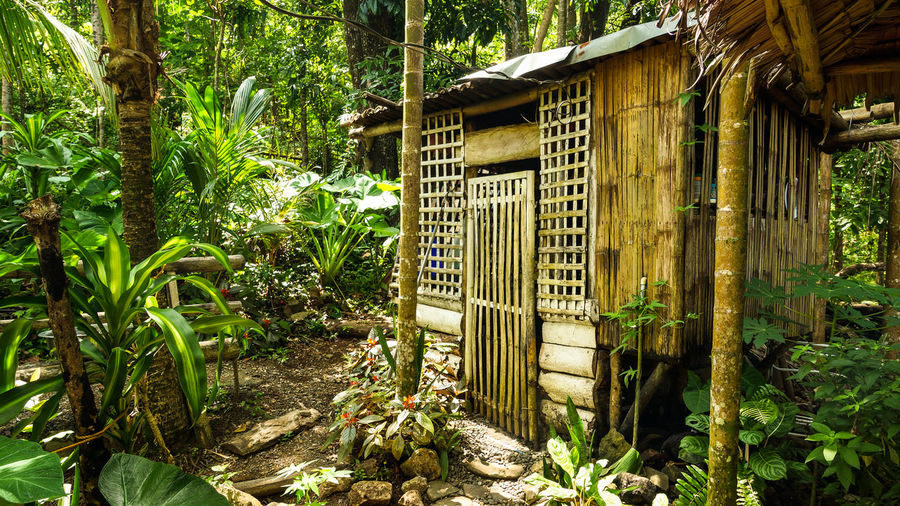 Close-up of shack in forest