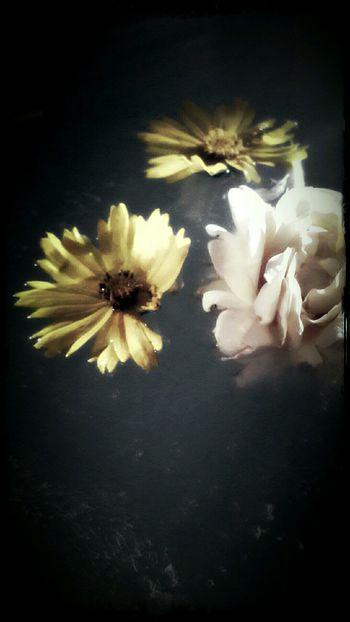 Bouquet In A Bottle Rose🌹 Adrift Flowerporn Flower EyeEm Nature Lover Floating Bath Time