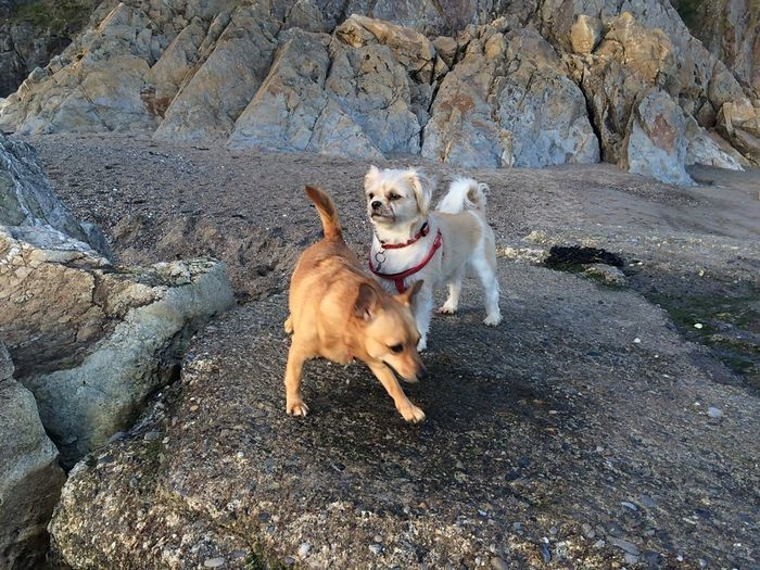 Two dogs on rock
