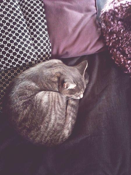 Roberta♥♥ Cat Sweet Dreams