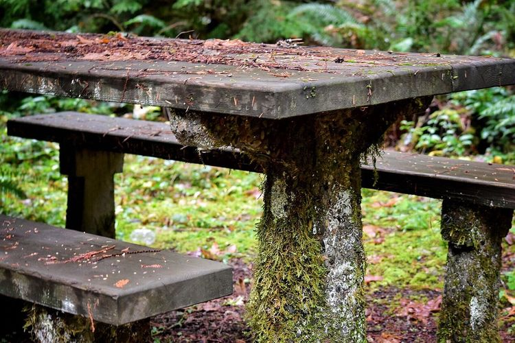 Wood - Material Nature Day No People Outdoors Built Structure Flower Plant Close-up Architecture Freshness Nature Photography Forest Photography Outside Photography Lush - Description Abandoned Abandoned Places Neglected Ruins Decay Man Made Object Beauty In Decay Picnic Table Old Table Moss