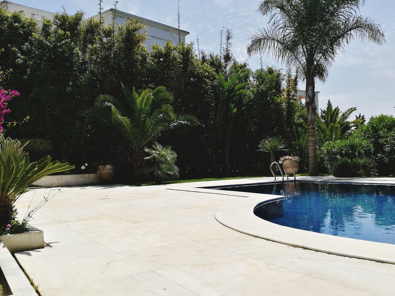 swimming pool, tree, water, palm tree, growth, day, outdoors, sky, summer, nature, no people, beauty in nature