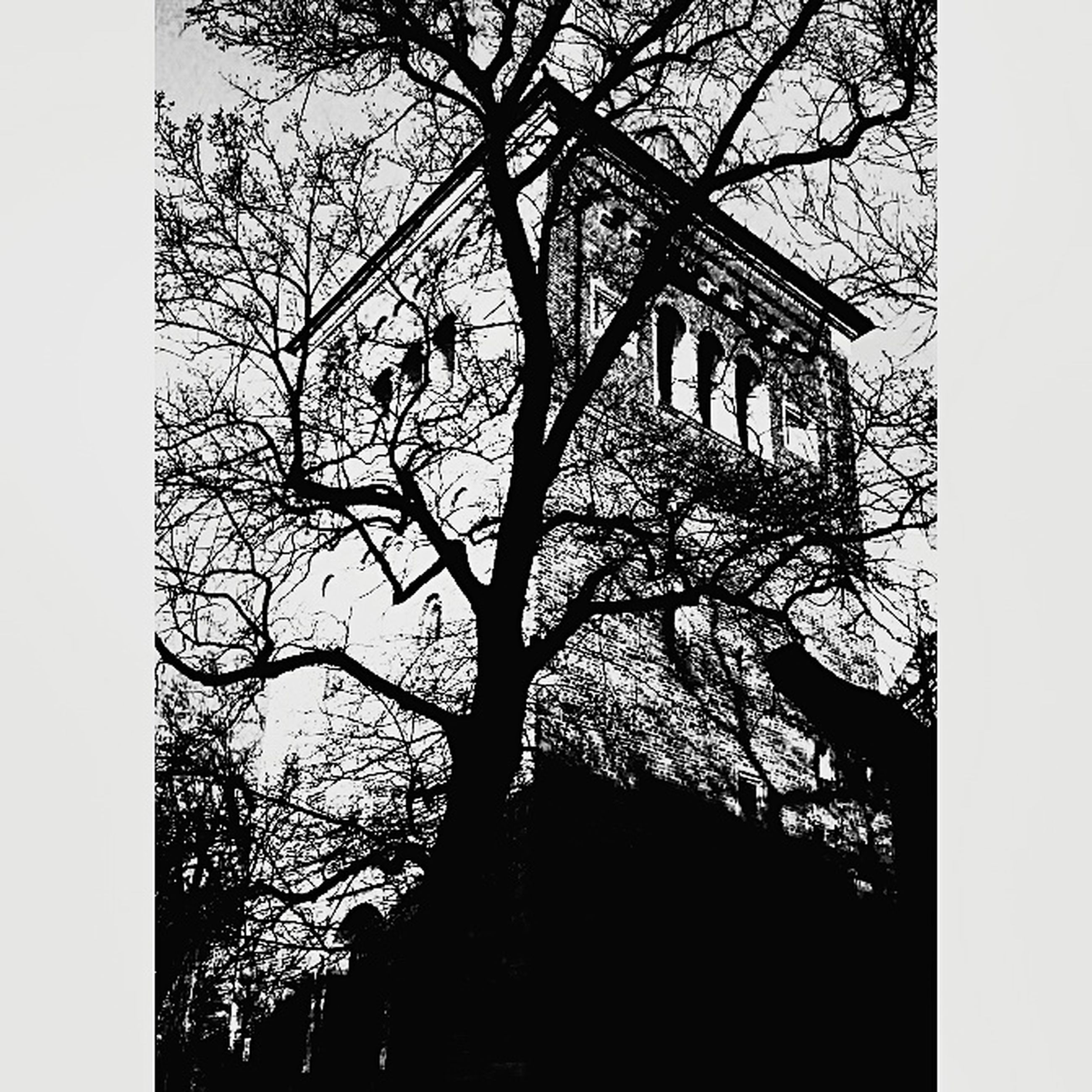 tree, low angle view, no people, branch, day, nature, outdoors, sky