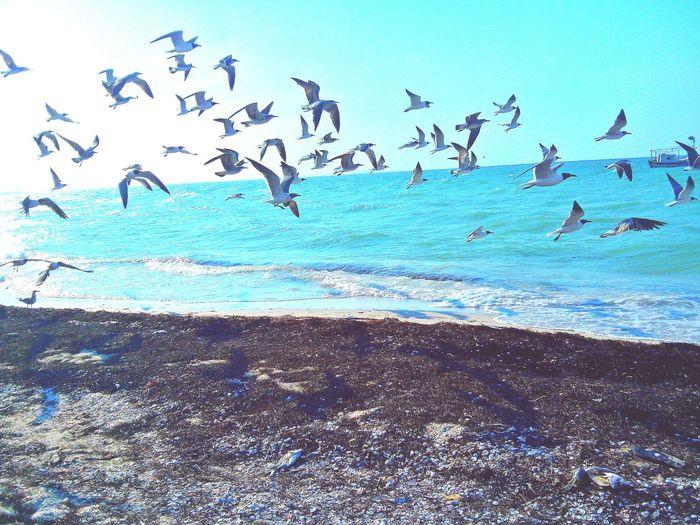 Alas para que , si a mí me gusta el mar. Bird Flamingo Flying Sea Colony Water Flock Of Birds Beach Blue Seagull First Eyeem Photo