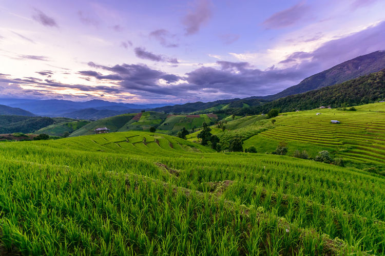 Chiangmai Agriculture Beauty In Nature Cloud - Sky Crop  Environment Farm Field Green Color Growth Idyllic Land Landscape Mountain Nature No People Outdoors Plant Plantation Rural Scene Scenics - Nature Sky Tea Crop Tranquil Scene Tranquility