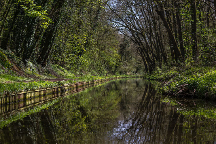 Landscape scene of water way in wooded area with clean reflections Beauty In Nature Boating Canal Countryside Day Green Color Growth Holiday Nature Outdoors Reflection Sky Tranquility Tree Vacation Water Woodland Walk First Eyeem Photo