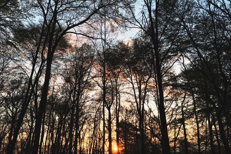 Woods Forest Trees Heads Up Sunset Fine Art Photography France Le Perche Silhouette