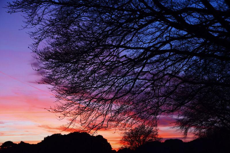 Phoenix Park,