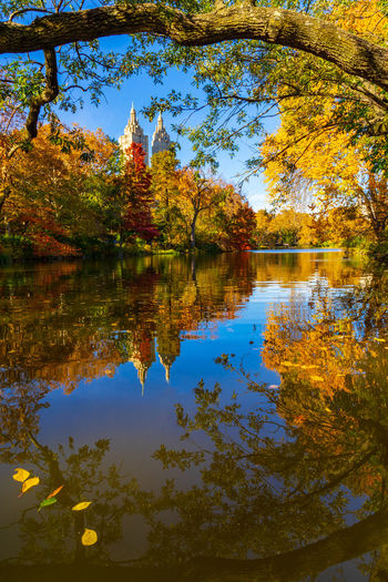 Autumn reflection at the Central Park lake. Reflection Tree Lake Plant Autumn Beauty In Nature Tranquility Tranquil Scene Scenics - Nature No People Nature Outdoors Water Sky Fall Fall Colors