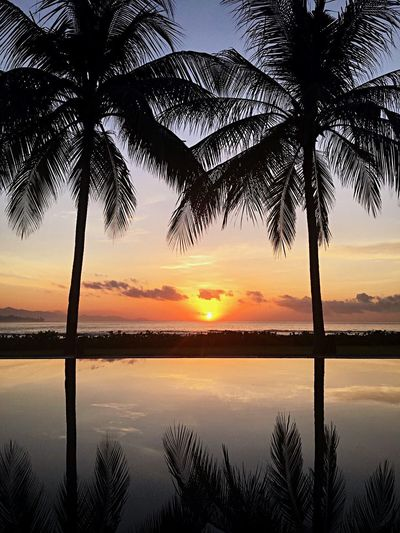 Sunset Palm Tree Silhouette Beauty In Nature Nature Beach Water Sea Sky Sun Reflection Vacations EyeEm Ready