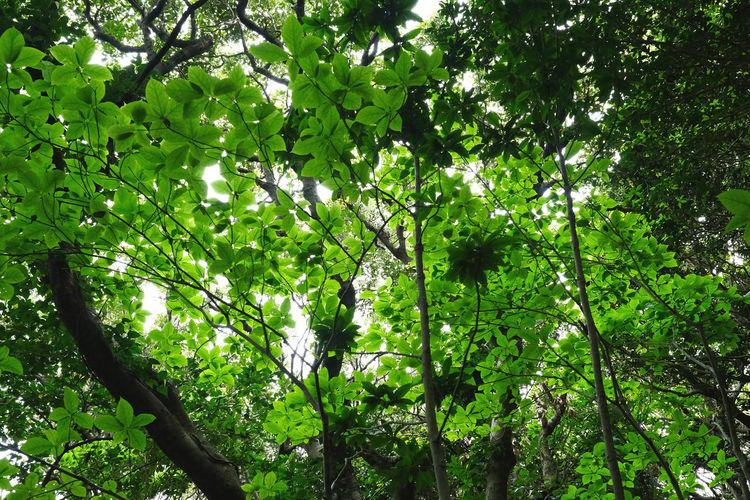 Tree Green Color Growth Nature Low Angle View Branch Outdoors Forest No People Beauty In Nature Day Leaf Backgrounds Full Frame Plant Freshness Sky EyeEm Nature Lover X-PRO2